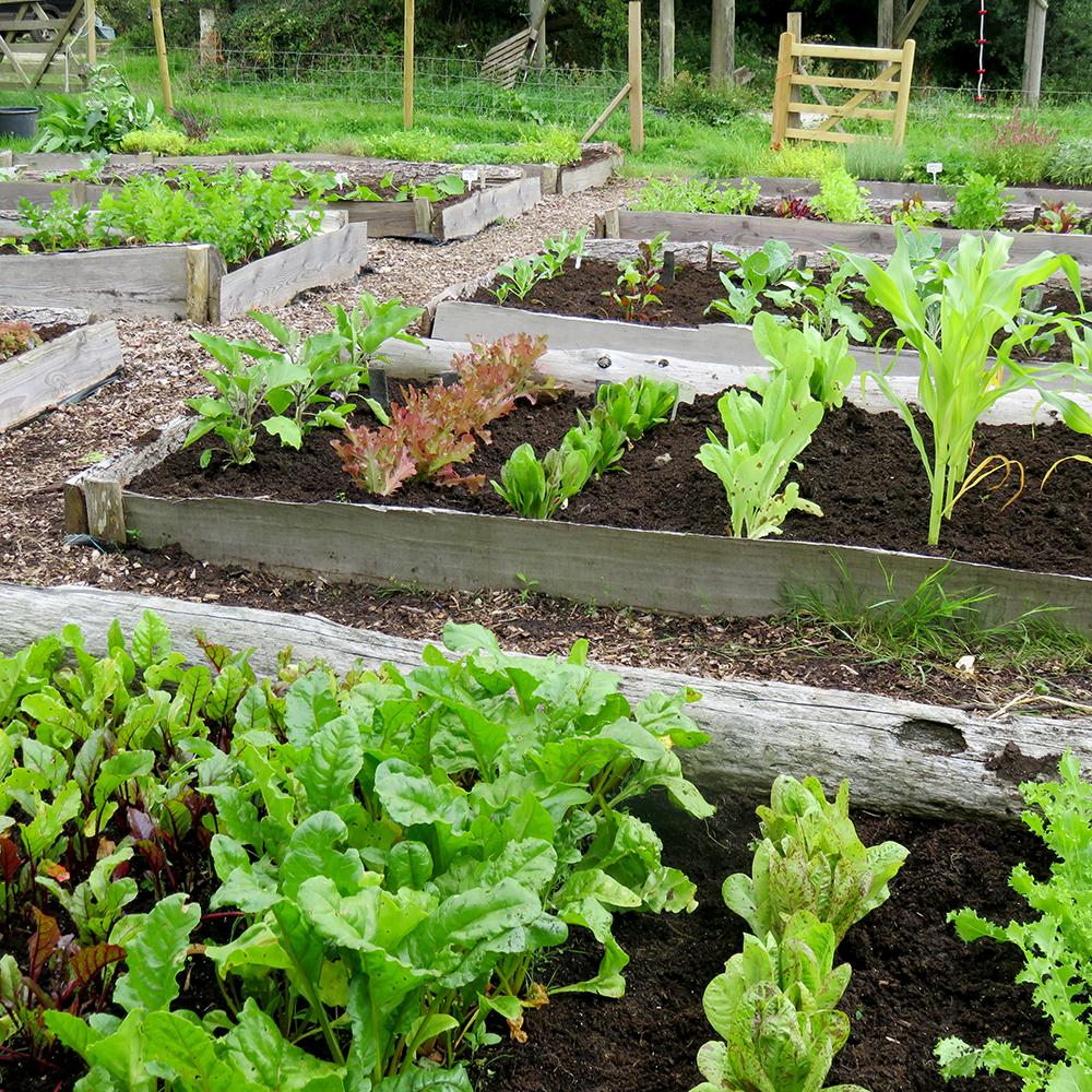 Gourmet vegetable garden rocket gardens for Vegetable patch