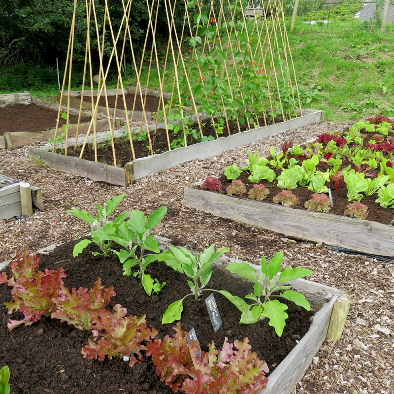 small veg patch rocket gardens