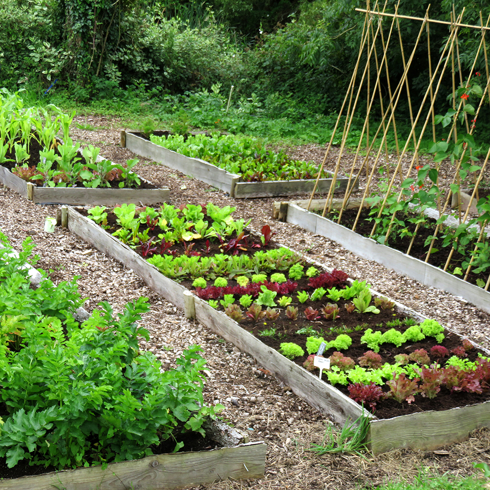 Vege Garden Design: Small Year Round Veg Patch