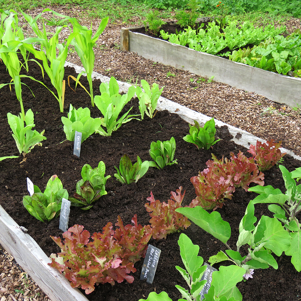 Mini year round veg patch rocket gardens for Vegetable patch in small garden