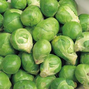 BRUSSELS-SPROUT-EVESHAM-SPECIAL-SQUARE-10801