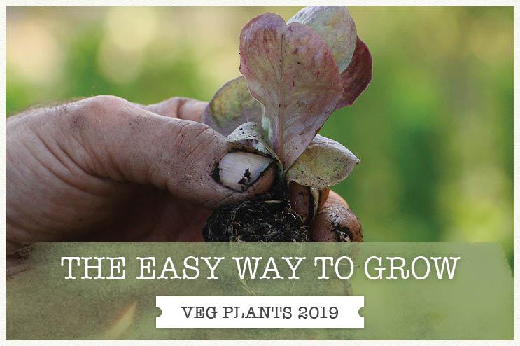 Spring Veg Plug Plants