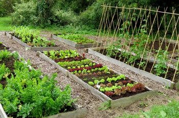 Start your Veg Patch