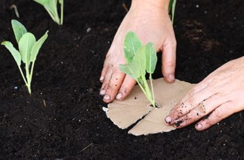 Grow Your Own: Top Tips